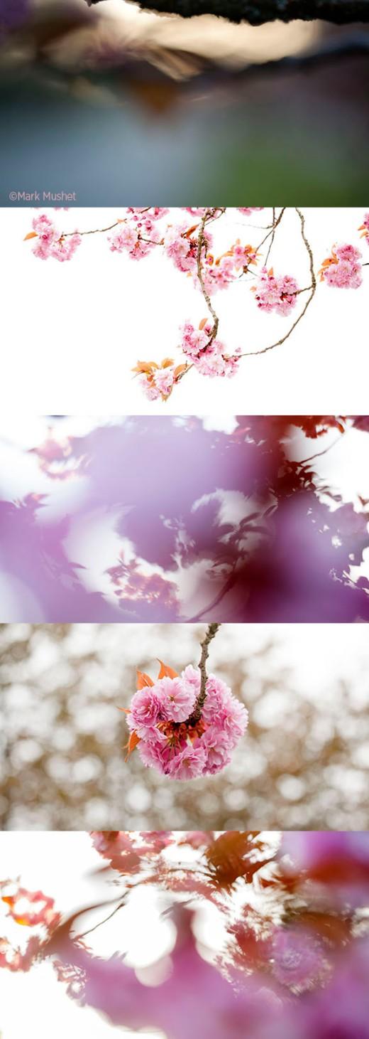 BlossomsVerticalMMP